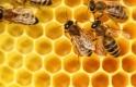 Támogatást kapnak a magyar méhészek