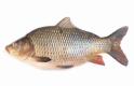 Szereted a halat? Jön egy fontos változás