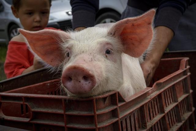 Kismalac a Minden gyerek lakjon jól! alapítvány adományosztásán a Szabolcs-Szatmár-Bereg megyei Székely községben 2015. május 5-én. MTI Fotó: Czeglédi Zsolt