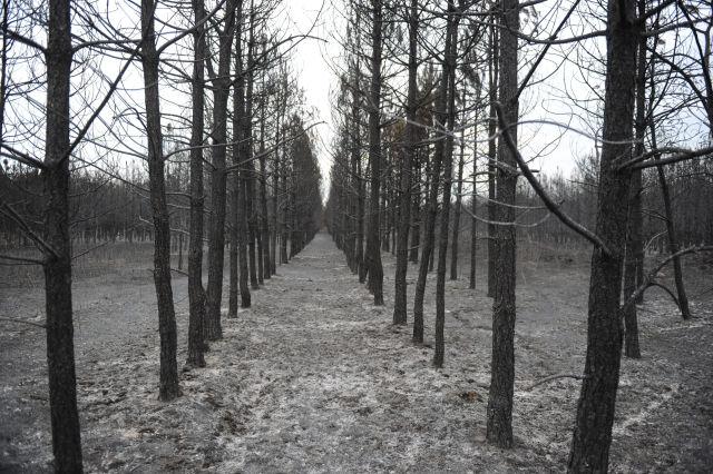 A Bács-Kiskun Megyei Katasztrófavédelmi Igazgatóság által közzétett képen kiégett erdő július 27-én Kiskunhalas mellett, ahol foltokban mintegy 350 hektáron kapott lángra lomberdő, száraz fű és avar.(Kép forrása: MTI Fotó, Bács-Kiskun Megyei Katasztrófavédelmi Igazgatóság/Kovács Andrea)