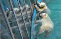 Óriási uniós pénzeket kap egy vidéki állatkert