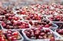 Indul a magyarok egyik kedvenc gyümölcsének szezonja