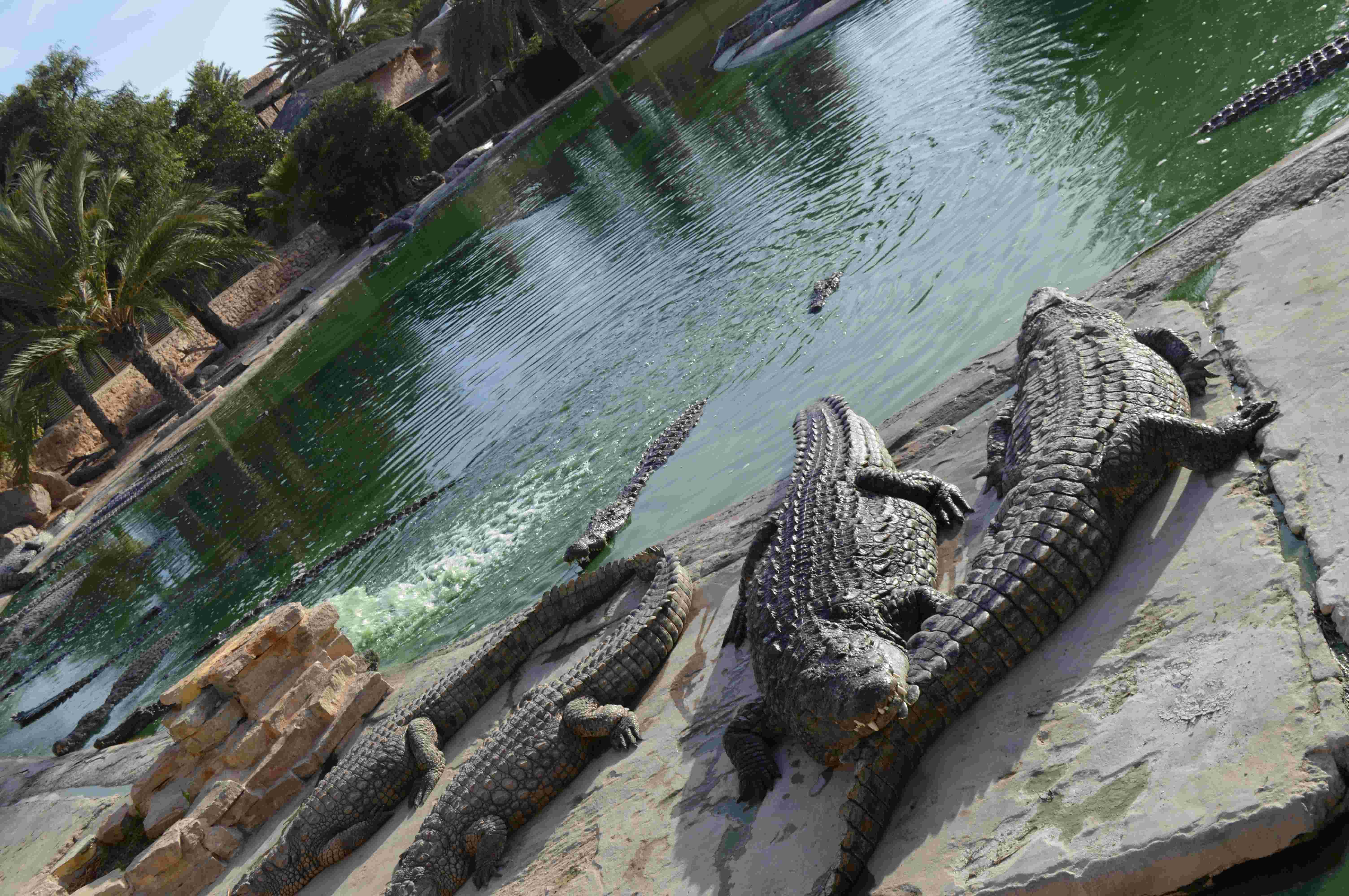 A krokodilfarm (Fotó: Kovács Lilla)