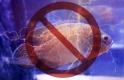 Nekiment a halászoknak az EU: tilos sokkolni a halakat?