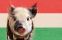Thaiföldre küldenénk magyar sertéshúst