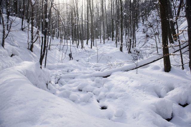 Behavazott erdő az Ilona-völgyben, Parádfürdő közelében 2018. február 28-án.Forrás: MTI/Komka Péter