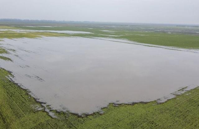 Belvízzel elöntött árpaföld Szarvas közelében 2018. március 25-én. A Körös-vidéki Vízügyi Igazgatóság mind a 10 belvízvédelmi szakaszán készültség van érvényben. Az elöntött területek nagysága már meghaladja a 13 600 hektárt az igazgatóság területén.MTI Fotó: Rosta Tibor