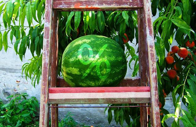 505b1383a68b Hamar a 100 forintos határ alá került a magyar görögdinnye, a nagyobb  áruházakban már az első hetekben megjelentek a 89 forint/kilós árak – írja a  ...