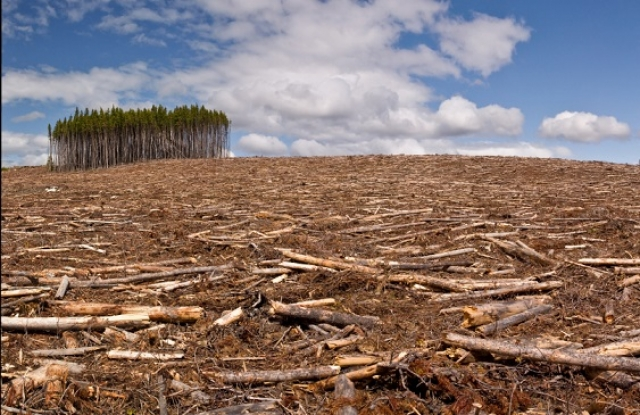 A károsanyag-kibocsátás mellett az erdőpusztítás is nagymértékben hozzájárul a klímaváltozáshoz. Brazíliában nemsokára különösen felpöröghet a fakitermelés.