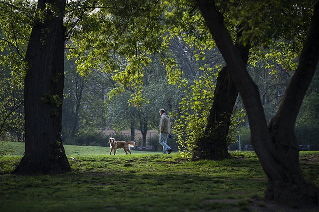 A Városliget néhány idősebb fája. Illusztráció. (Fotó: MTI/Mónus Márton)