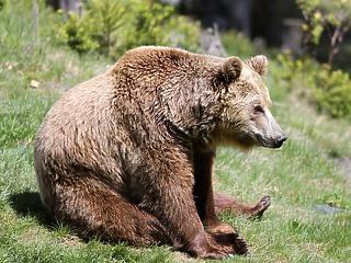 Megint láttak egy medvét