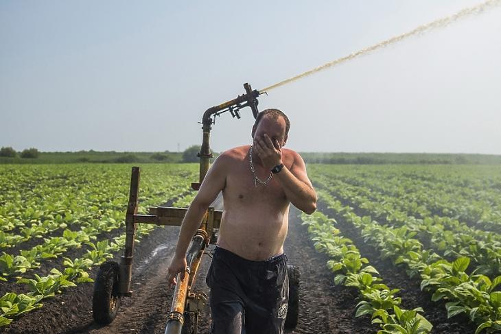 Klímaváltozás: így égette el a magyar zöldségtermést az idei nyár