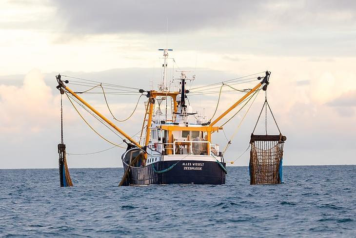Brit hal belga hálóban: az Alles Wisselt nevű belga halászhajó a La Manche csatornában az angliai Kelet-Sussex partjainál 2020. november 10-én. EPA/VICKIE FLORES