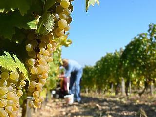 Nem minden maradhat tokaji bor, ami eddig tokaji bor volt
