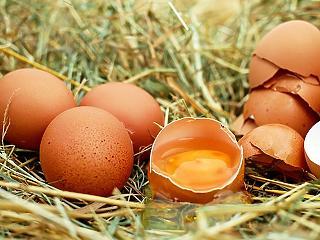 Mekkora nyomot hagyott a húsvéti nyúl a boltokban?