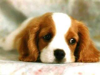 Szalmonellás kutyaeledelt találtak