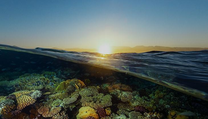 Korallzátony a Vörös-tengerben (Fotó: Saudi Green Initiative)