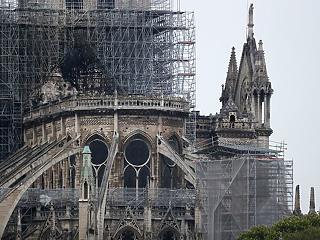 Óriástölgyeket ajánlottak fel a Notre-Dame újjáépítéséhez