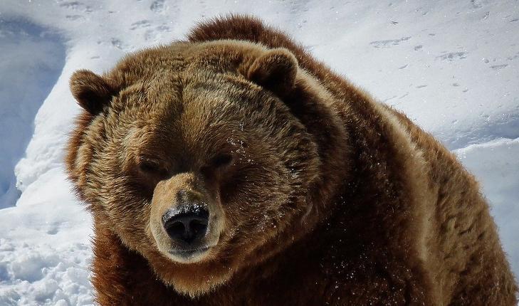 Medve, az eső trend jele (Pixabay.com)