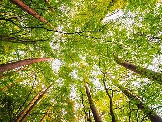 Döntött az EP: így védenék meg a Föld klímáját
