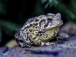 Természetvédő Soros-szervezeteket is támogat a kormány