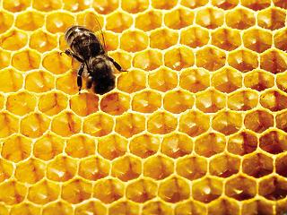 Ötven éve nem termett olyan kevés méz, mint amennyi idén