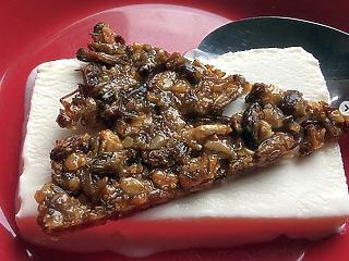 Lombikhús és rovarfehérje – ilyenekkel fognak etetni bennünket