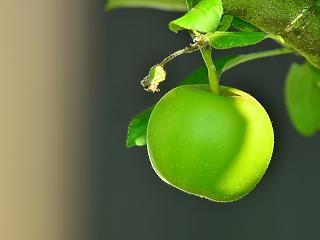 Megvan, miért drágulhat durván az alma a boltokban