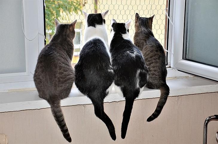 50-ből 6 macska pozitív. Fotó: pixabay