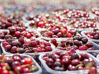 30 százalékkal is drágább lehet idén a cseresznye, mert túl kevés termett belőle