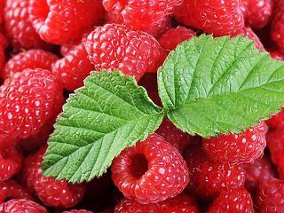 Új, veszélyes kártevő pusztítja a magyar gyümölcsöt - nincs ellenszer?
