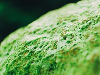A jövő építészetében az alga főszerepet kap