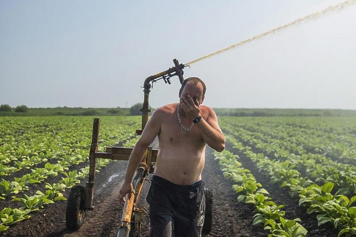 Egy mezőgazdasági munkás megtörli arcát egy öntözőpisztoly mellett (MTI Fotó: Balázs Attila)