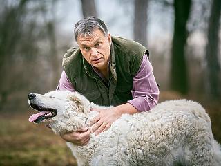 Hivatalosan is kutyabolond nemzet a magyar