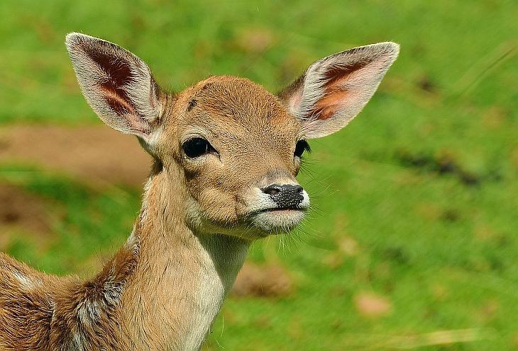 Nagy bajban van a vadászturizmus a koronavírus miatt