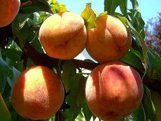Ha szereted ezeket a gyümölcsöket, van egy rossz hírünk