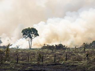 Őrült tempóban kezdték irtani az esőerdőt – hol várhatók fegyveres konfliktusok?