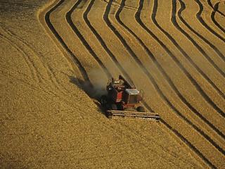 A legfontosabb alapanyagok vitték le az élelmiszerárakat