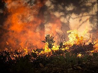 Kirándulókból erdőirtók – ennyin múlik a katasztrófa