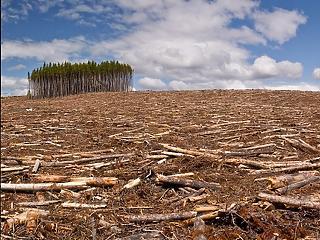 Az EU importálja a legtöbb olyan terméket, ami a brazíliai esőerdők irtásával jár