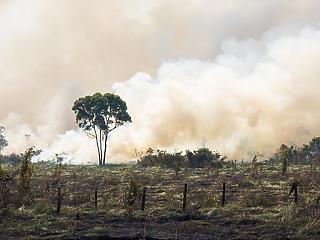 Nem elég a koronavírus: drámaian felpörgött az erdőirtás Brazíliában