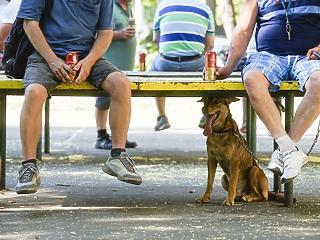 Brutális kánikula - tudod, hogy a háziállatokról hogy kell gondoskodni?
