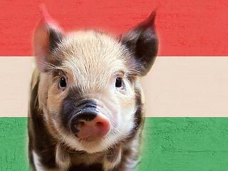 Mi köze a kínai disznóknak a magyar inflációhoz?