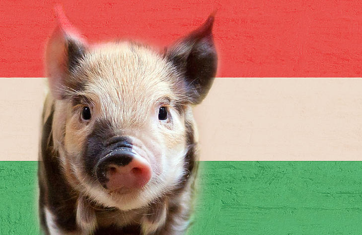 Közel 300 milliárd forintot szórt ki a kormány az állattartóknak