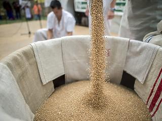 Hogy fogják elvinni a gabonát? Leállt a folyami szállítmányozás a Dunán