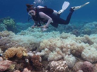 Meghökkentő jelenséget figyeltek meg a Nagy-korallzátonyon - mégis van remény?