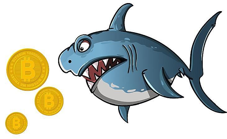 Bitcoin-cápa (Pixabay.com, Canva.com)
