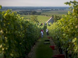 Kicsinálta az időjárás a francia bort