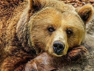 Patthelyzet alakult ki a forint körül, eljött az emberek medvepiaca