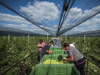 Kihasználják a gazdákat: a miniszter az almatermelők mellé állt